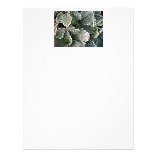 Frosted Strawberry Leaves - Photograph Personalized Letterhead