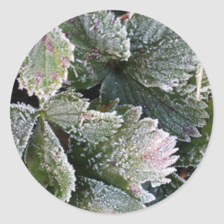 Frosted Strawberry Leaves - Photograph Round Sticker