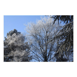 frosted trees photo print