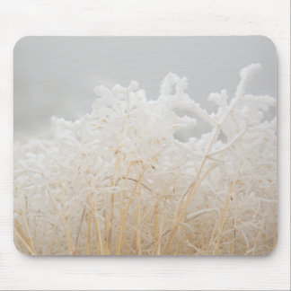 Frosted Winter Grasses Mouse Pad