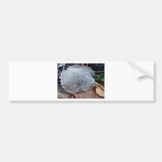 FROSTY AUTUMN LEAF BUMPER STICKER