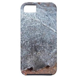 FROSTY AUTUMN LEAF iPhone SE/5/5s CASE