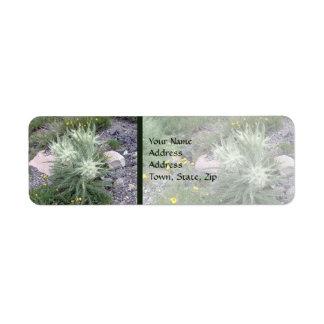 Frosty Ball Alpine Wildflowers Label