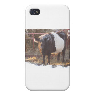 Frosty Belted Galloway Cow Covers For iPhone 4