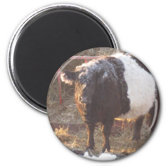 Frosty Belted Galloway Cow Magnet