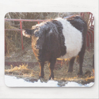 Frosty Belted Galloway Cow Mouse Pad