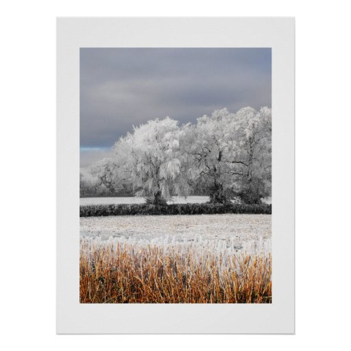 Frosty fields and trees poster