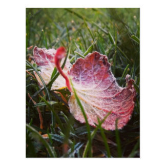 Frosty leaf postcard