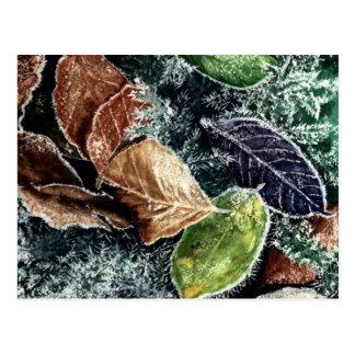 Frosty Leaves Postcard