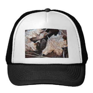 Frosty Maple Leaves, photograph Trucker Hat
