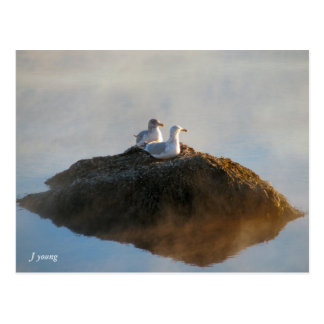 Frosty Morn by J Young Postcard