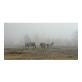 Frosty Morning Fog photo cards