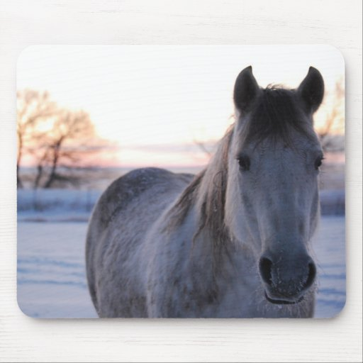 Frosty Morning Horse Mouse Pads