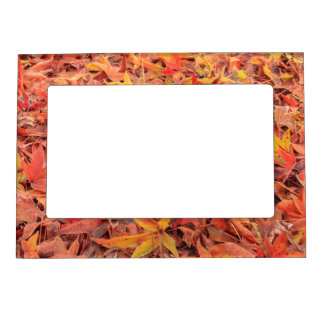 Frosty morning, Mill Creek, WA, USA Magnetic Picture Frame