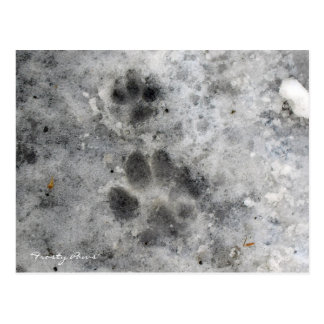 """""""Frosty Paws"""" Post Cards"""