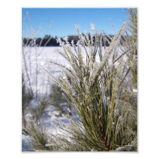 Frosty Pine Photo Art
