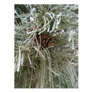 Frosty Pine Postcard