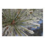 Frosty pine tree in winter Imaginative Imagery Poster