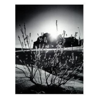 Frosty plants postcard
