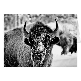 Frosty Yellowstone Bison Card