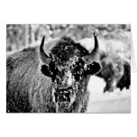 Frosty Yellowstone Bison Cards