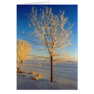 FrostyTree1 Greeting Card