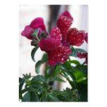 frozen berries business cards