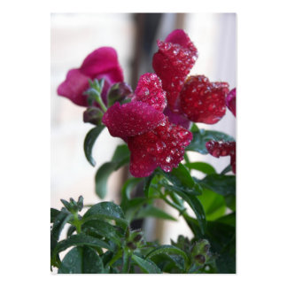 frozen berries large business cards (Pack of 100)