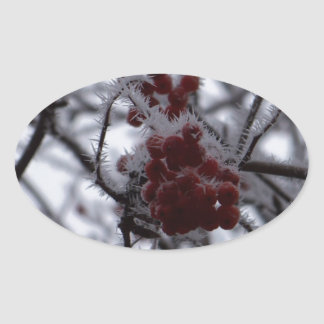 Frozen Berries Oval Sticker