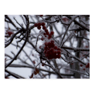 Frozen Berries Postcard
