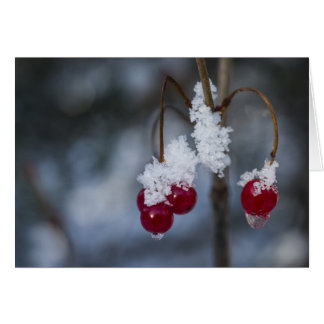 Frozen Cranberry Greeting Card