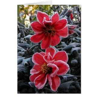 Frozen Dahlia 65 ~ card
