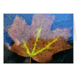 Frozen Fall Maple Leaf Late Autumn Nature Card