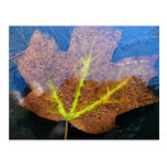 Frozen Fall Maple Leaf Late Autumn Nature Postcard