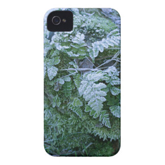 Frozen Fern iPhone 4/4S Case-Mate Barely There iPhone 4 Case-Mate Case