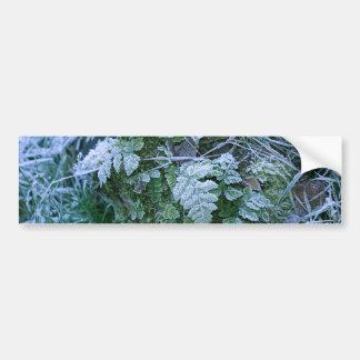 Frozen Fern on a Tree Stump Bumper Stickers