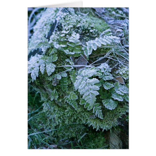 Frozen Fern on a Tree Stump Card