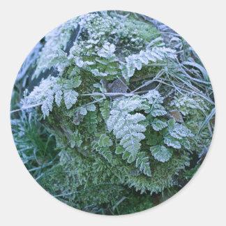 Frozen Fern on a Tree Stump Stickers