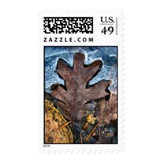 frozen oak postage