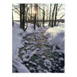 Frozen Path Postcard