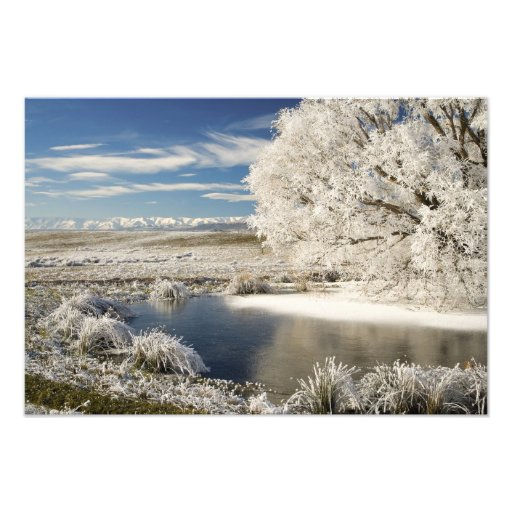 Frozen Pond and Hoar Frost on Willow Tree, Photo Art