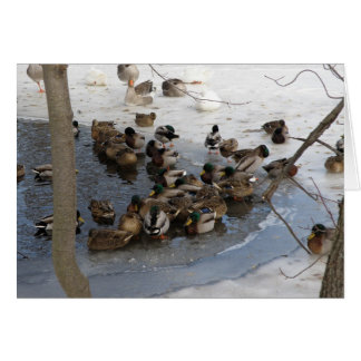 Frozen Pond with Ducks Card
