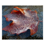 Frozen Red Maple Leaf Late Autumn Nature Poster