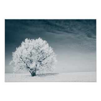 Frozen tree on winter field and blue sky posters
