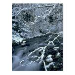 Frozen Trees Postcard