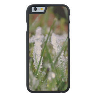 Frozen Winter Grass Carved Maple iPhone 6 Case
