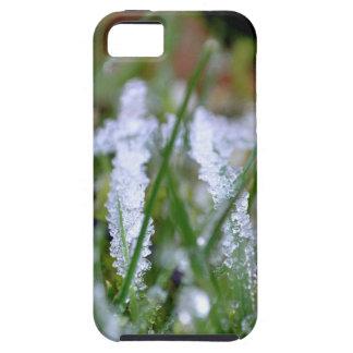 Frozen Winter Grass iPhone 5 Covers