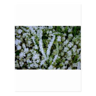 Frozen Winter Grass Postcard