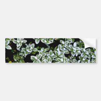 Frozen Winter Plants Bumper Sticker