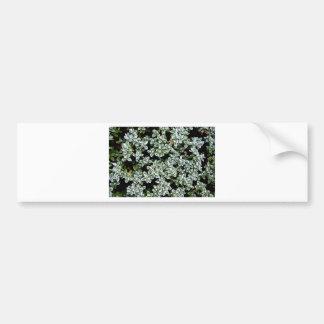 Frozen Winter Plants Car Bumper Sticker